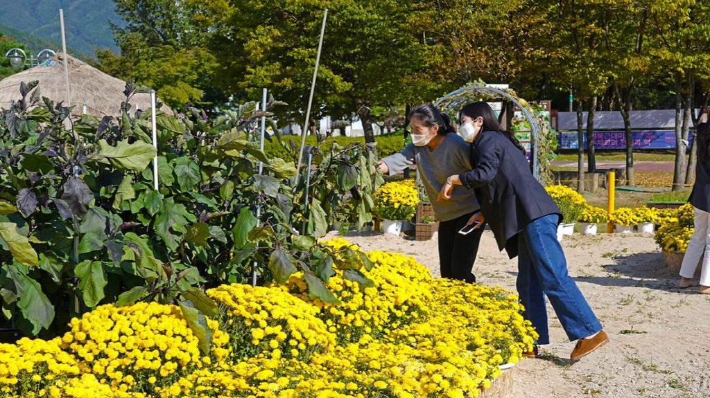경주엑스포공원을 찾은 관광객들이 '행복한 텃밭정원'에서 가지나무를 살펴보고 있다.